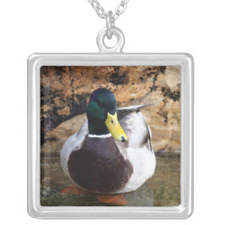 Male Mallard Duck Silver Plated Necklace