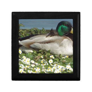 Male Mallard Duck Small Square Gift Box