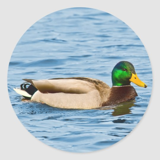 Male Mallard Duck Sticker