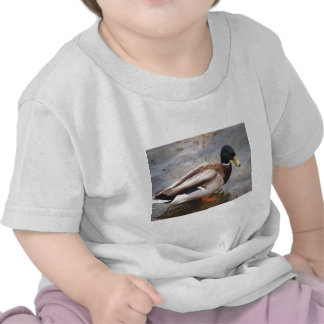 Male Mallard Duck Shirts