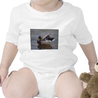 Male Mallard Duck Tee Shirts