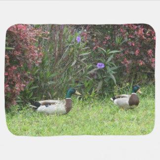 Male Mallard Ducks Receiving Blankets