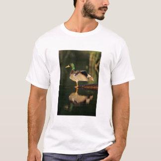 Male mallard stretching, Illinois T-Shirt