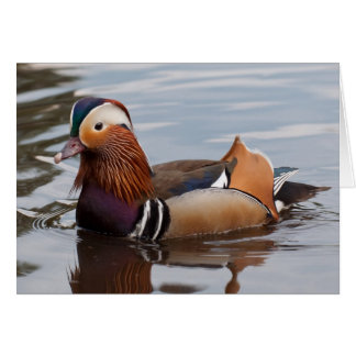 Male Mandarin Duck Notecard Note Card
