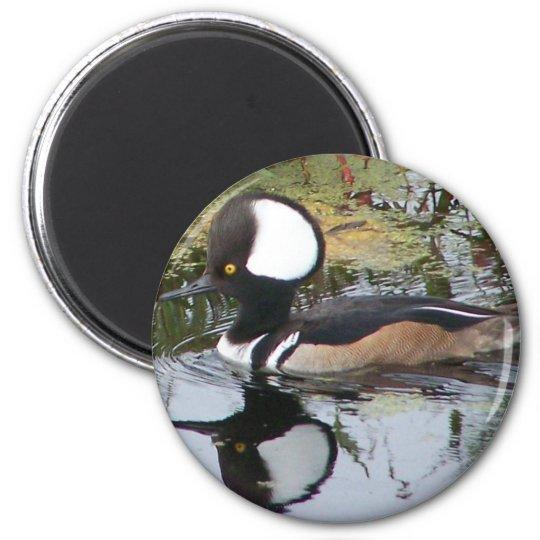 Male Merganser Duck Magnet
