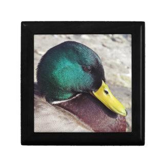 Male Mullard Duck Keepsake Boxes
