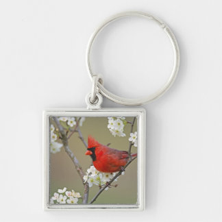 Male Northern Cardinal among pear tree Key Ring