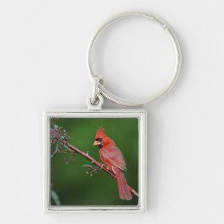 Male Northern Cardinal, Cardinalis Silver-Colored Square Key Ring