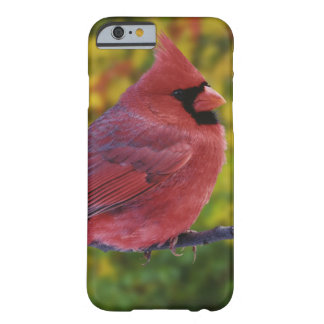Male Northern Cardinal in autumn, Cardinalis Barely There iPhone 6 Case