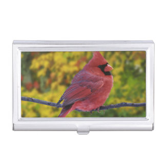 Male Northern Cardinal in autumn, Cardinalis Business Card Holder