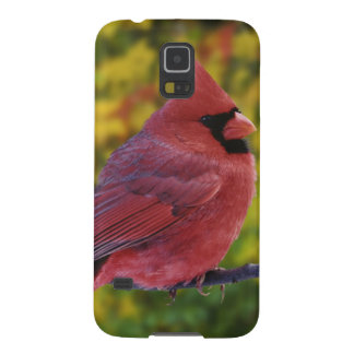 Male Northern Cardinal in autumn, Cardinalis Galaxy S5 Cover