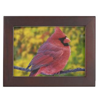 Male Northern Cardinal in autumn, Cardinalis Keepsake Box