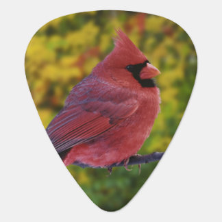 Male Northern Cardinal in autumn, Cardinalis Plectrum