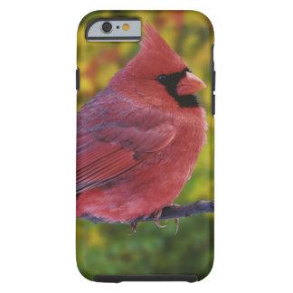 Male Northern Cardinal in autumn, Cardinalis Tough iPhone 6 Case