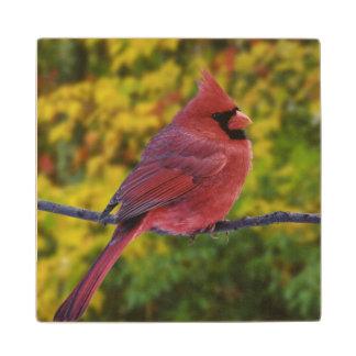 Male Northern Cardinal in autumn, Cardinalis Wood Coaster