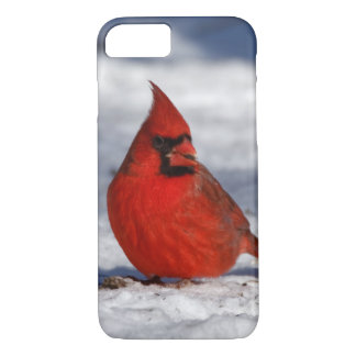 Male Northern Cardinal in the Snow iPhone 8/7 Case