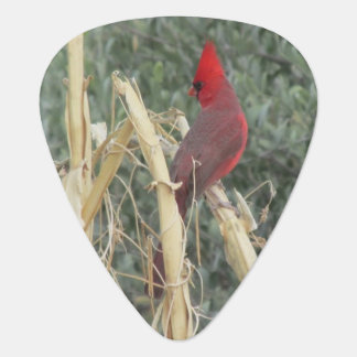 Male Northern Cardinal on Corn Tassel Plectrum