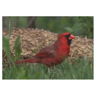 Male Northern Cardinal Wood Poster