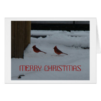 Male Northern Cardinals In Snow Cards