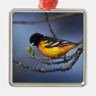 Male Northern Oriole, formerly Baltimore Oriole Christmas Ornament