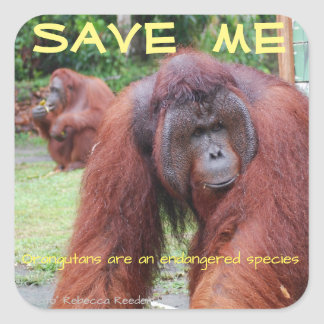 Male Orangutan Borneo Animals Square Sticker