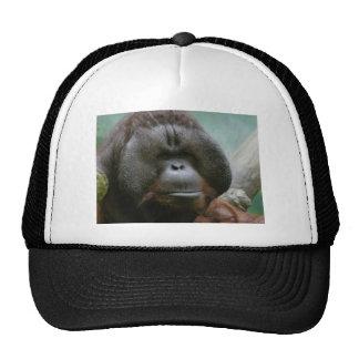 male orangutan cap