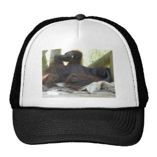 male orangutan hat
