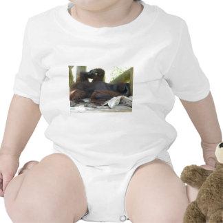 male orangutan baby bodysuit