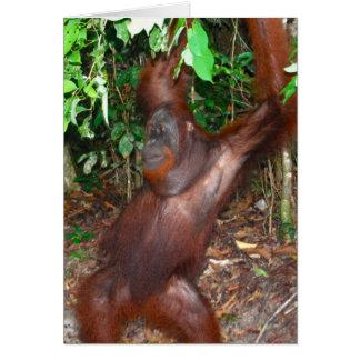 Male Orangutan with Red Beard Note Card