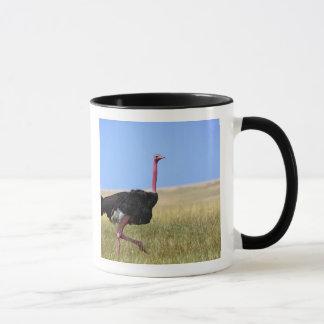 Male Ostrich in breeding plumage, Struthio Mug