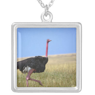 Male Ostrich in breeding plumage, Struthio Silver Plated Necklace