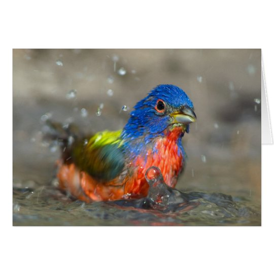 Male Painted Bunting Card