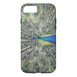 Male Peacock displaying (Pavo cristatus) iPhone 8/7 Case