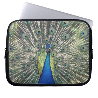 Male Peacock displaying (Pavo cristatus) Laptop Sleeve