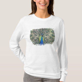 Male Peacock displaying (Pavo cristatus) T-Shirt