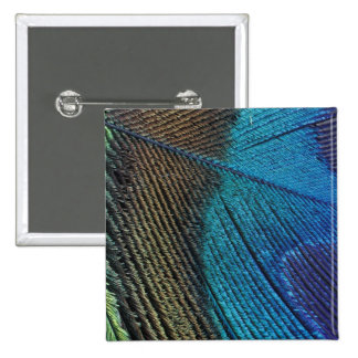 Male peacock feather detail 15 cm square badge