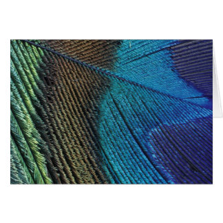 Male peacock feather detail card