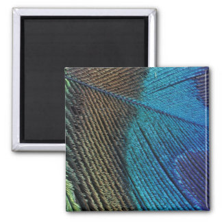 Male peacock feather detail fridge magnet