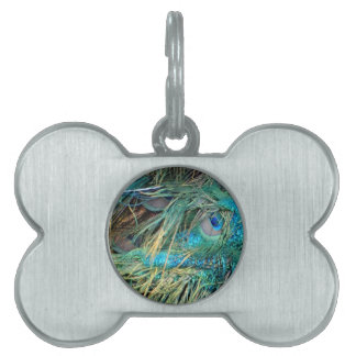 Male Peacock Feathers Blue And Green Pet ID Tag