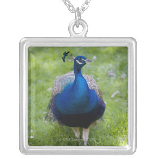 Male peacock (Pavo cristatus) Silver Plated Necklace