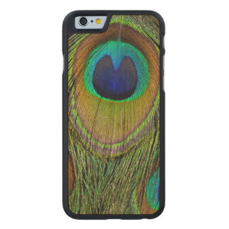 Male peacock tail feathers carved® maple iPhone 6 slim case