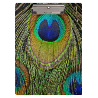 Male peacock tail feathers clipboard