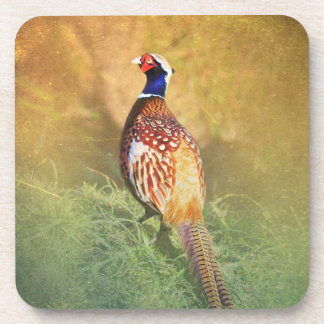 Male Pheasant Coasters