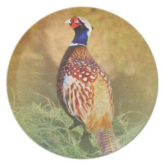 Male Pheasant Plate
