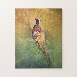 Male Pheasant Puzzle