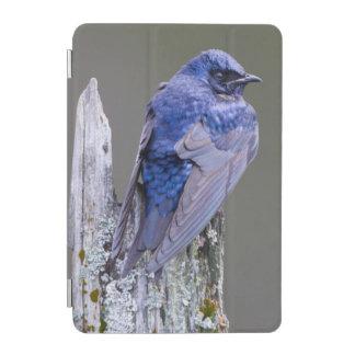 Male Purple Martin nest over Lake Sammamish iPad Mini Cover