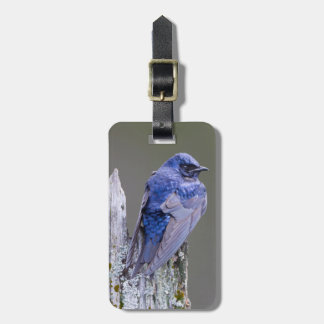 Male Purple Martin nest over Lake Sammamish Luggage Tag