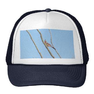 Male Pyrrhuloxia Hat