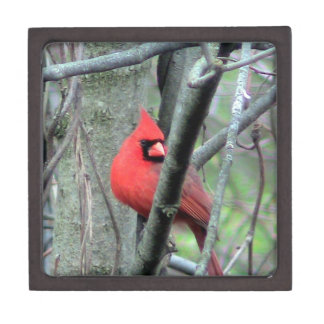 Male Red Cardinal Premium Gift Box