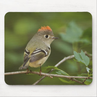 Male Ruby-crowned Kinglet, Regulus calendula Mouse Mat
